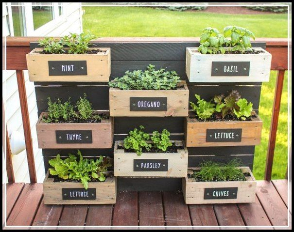 Shoots Sprouts And Stems Gardening Advice And Ideas Special Garden Design Herb Garden Wall Diy Herb Garden Outdoor Herb Garden