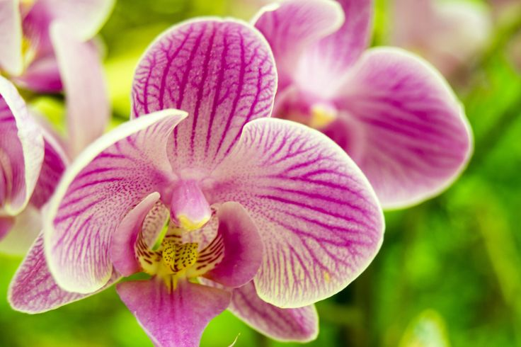 Pink orchid by Agnese Caliò on 500px