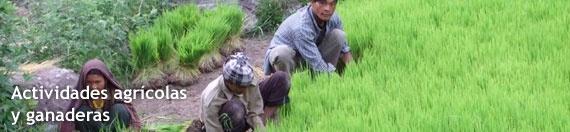 Este tipo de actividades atacan directamente las causas subyacentes del déficit en la producción de alimentos y consisten en: la mejora en el acceso a los recursos para la producción agrícola, como la tierra, el agua, las semillas o los fertilizantes; la protección de los recursos naturales y la mejora en su gestión; una administración más estratégica de los recursos ganaderos; o el avance en el acceso a los mercados.