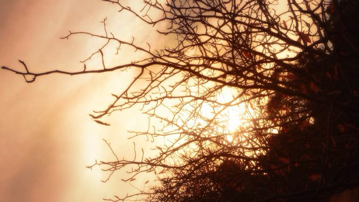 Autumn branches at dusk