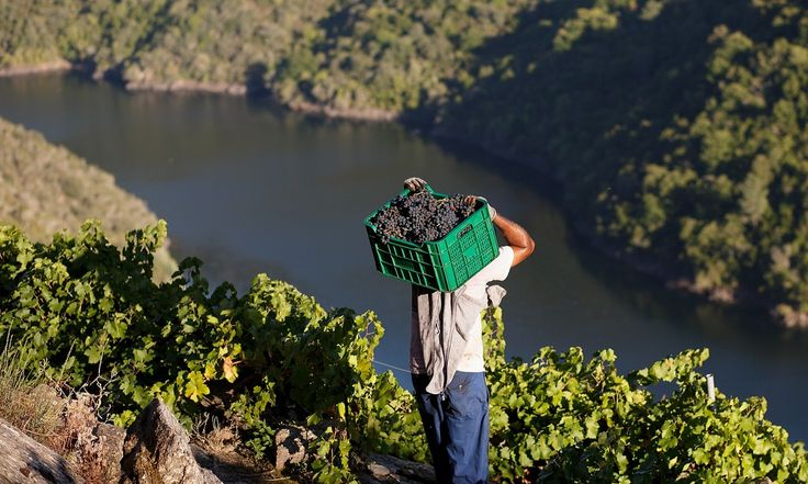 Wine: there's more to Galicia than albariño | Life and style | The Guardian