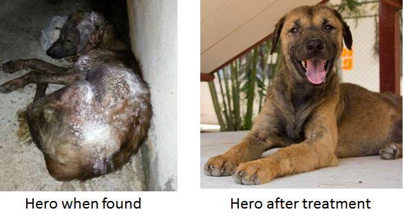 Join The Emergency response Tream Today!  #adoptdontshop #enddogmeattrade #crueltyfree  #Animallovers #vegan #animalrights