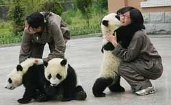 Awww... Hugging pandas. I wish I could do this!