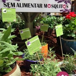 Em tempos de Dengue e Zika, vamos aproveitar o que vem da natureza para manter os insetos afastados de nossos espaços de convivência. O Primavera Garden organizou uma lista das plantas – temp…