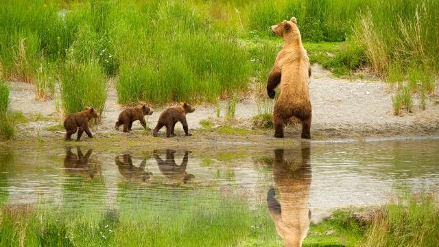 Mama Bear & Three Babies