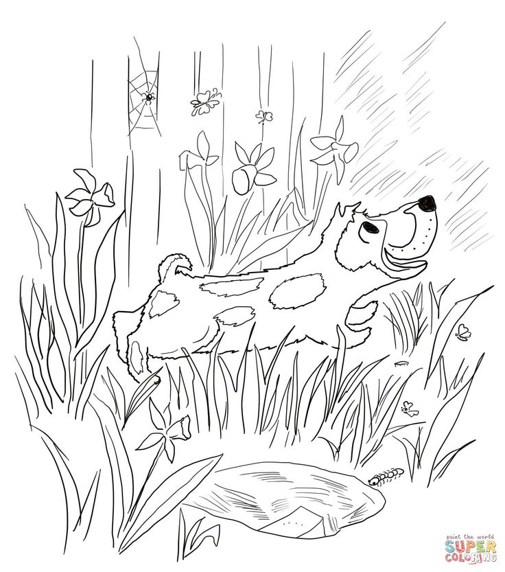 7 best kindergarten literature unit ideas harry the for Harry the dirty dog coloring page