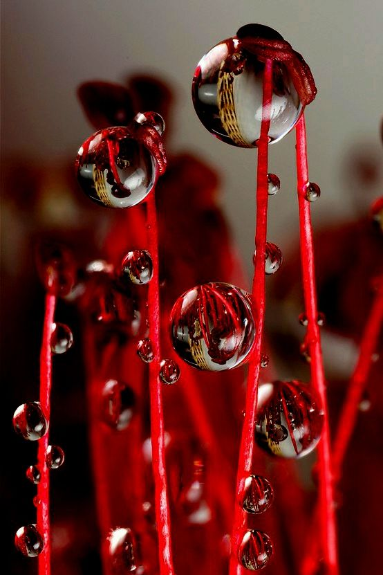redWall Art, Red, Waterdrop, Dew Drop, Dewdrops, Raindrop, Water Droplets, Photography, Rain Drop
