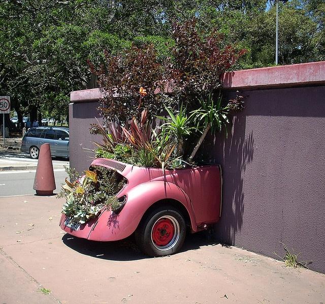 VW plant car, Moore Park, Sydney, NSW Moore park, Plants