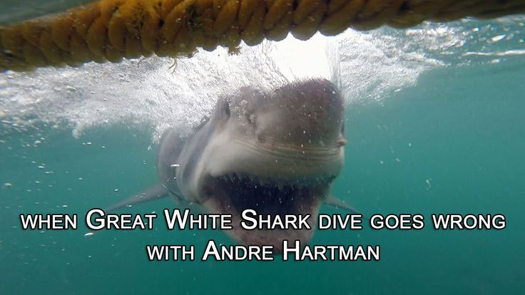 When Great White Shark dive goes wrong with Andre Hartman