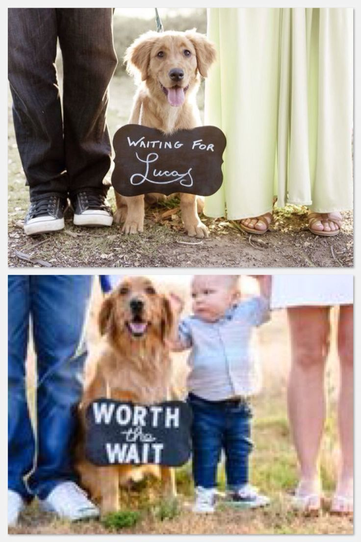 Maternity photos with dog. Family photos with dog. Pregnancy progression. Waiting for baby. Jessica Fraser Photography San Diego