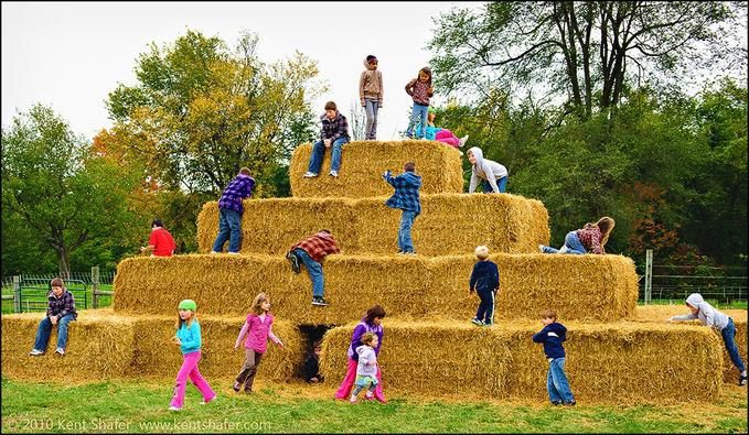 Who needs fancy play structures?  Just be sure to wear long sleeves and long pants!