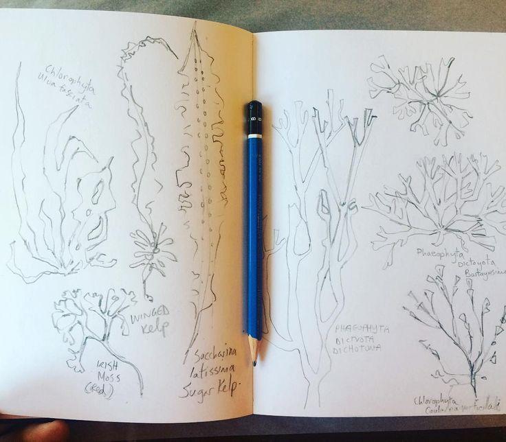 Studying seaweed in the sketchbook! #pencilart #pencilsketch #pencil #pencildrawings #pencil_art #pencilwork #sketchbook #sketch #sketches #sketching #nature #naturelovers #natureart #art #artistsofinstagram #artistsoninstagram #seaweed #plants #plantsofinstagram