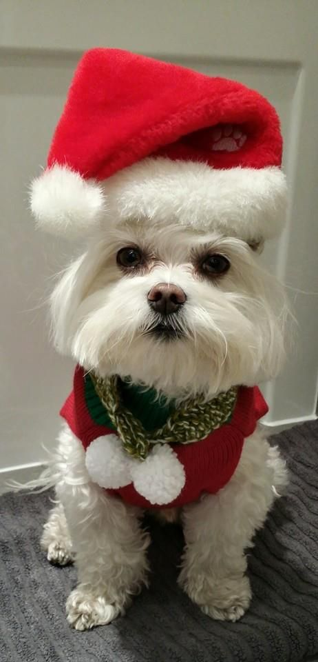 """Crissy says """"Merry Christmas"""" and come to Ashira Jewelry to SAVE MONEY on this week's sale."""