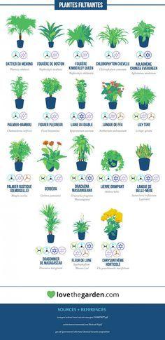 Selon la NASA, voici les plantes les plus efficaces pour purifier l'air de votre intérieur | Daily Geek Show