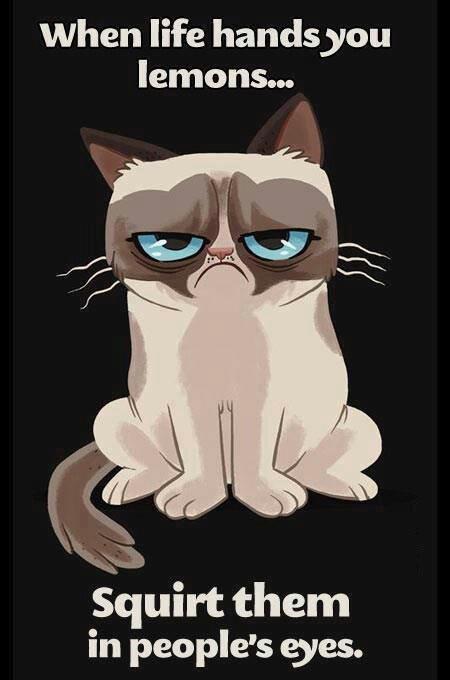 Grumpy kitties words of wisdom