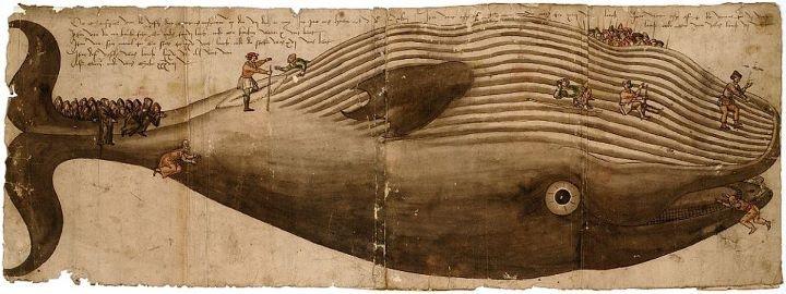 Museum Plantin-Moretus / Prentenkabinet    Op het strand van Heist zijn ze volop het kadaver aan het opruimen van de potvis die er gisteren aanspoelde. Tientallen kijklustigen zakten af naar het strand om het dier te zien. Te laat? Kom naar het Prentenkabinet en bewonder onze aangespoelde vinvis uit 1547.