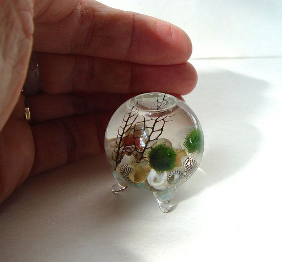 NEW! Zen. PICO. Orb. Marimo Ball. Ecosphere. Terrarium  Three teeny tiny Live Marimo Balls that are 1/4 to 1/8 tall are nestled peacefully in their very