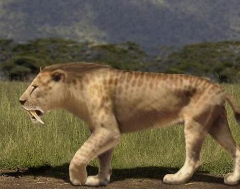 Real Saber Tooth Tiger | Sabre-Toothed Tiger (Smilodon ...