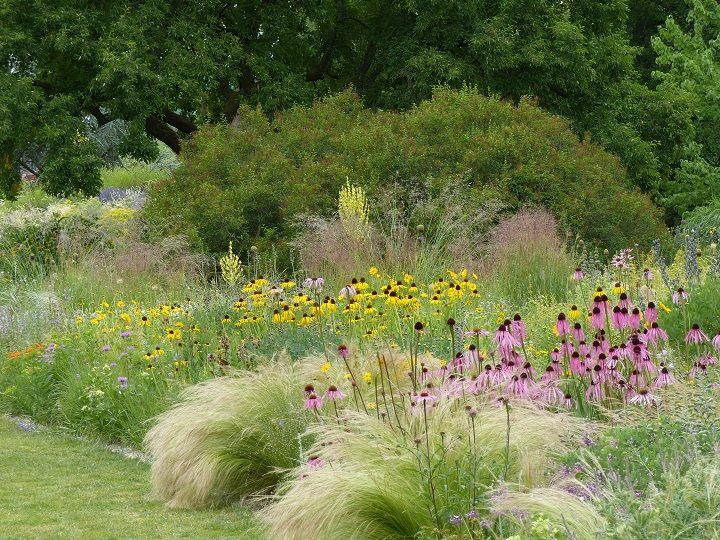 La plantation gramin es chinac es au jardin hermannshof for Plantation au jardin