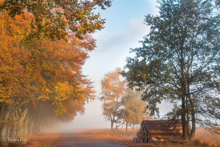Foggy weather and autumn colors