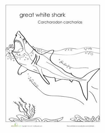 types of sharks ile ilgili görsel sonucu