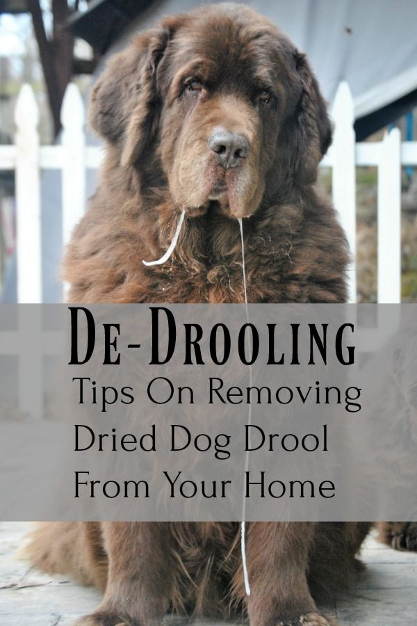 De Drooling Tips On Removing Dried Dog Drool From Your Home