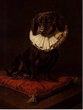 Elizabethan Dachshund