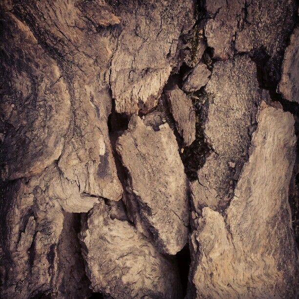 Woodland 1. Budai-hegység, Kis-Hárs-Hegy #budai_hegyseg #nature #trees #macro #talaj #earth #brown #termeszet