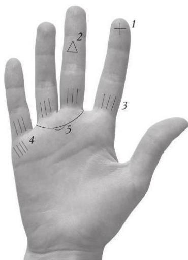 1 – ярко выраженный крест на верхней фаланге указательного пальца – дар ясновидения. 2 – треугольник на средней фаланге среднего пальца – наличие экстрасенсорн