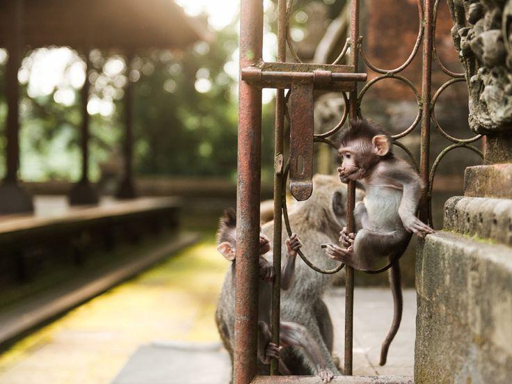 Bali travel photography Monkey forest Ubud © Ann-Kathrin Koch Photography 2013 www.annkathrinkoch.com