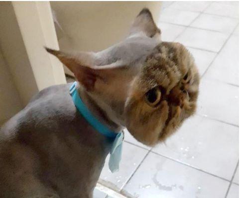 『ごめんなさい。サロンを変えるべきではなかったわ』彼女が絶句したペルシャ猫の姿 | ねこっぷる