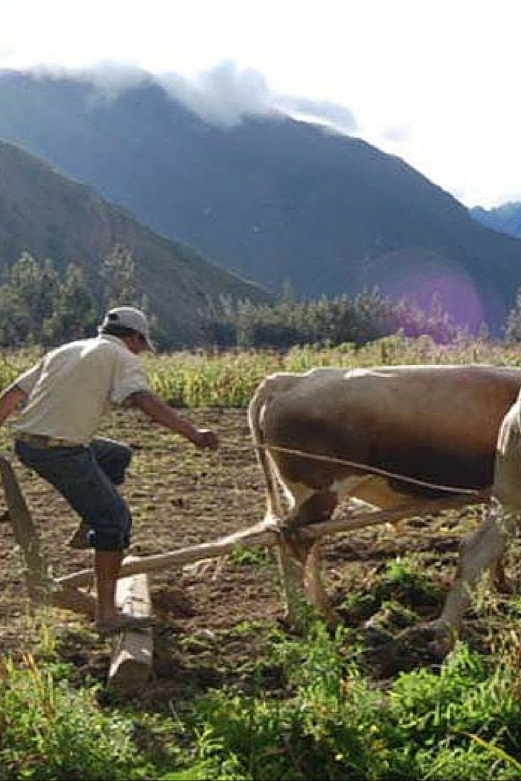 We visit Albergue Farm where we pick our own food for lunch and then have it cooked in delicious Peruvian style. #adventure
