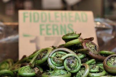 fiddlehead ferns fiddleheads fernbank cottage pteridomania fern fern ...