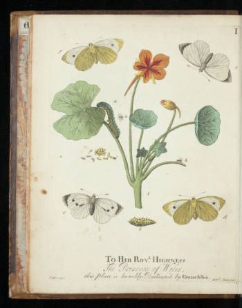 A natural history of English insects :: Rare Books and Manuscripts Collection