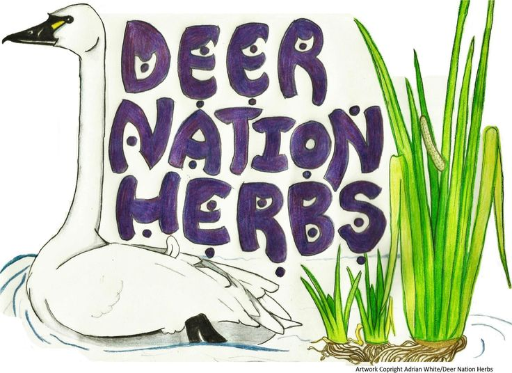 Iowa Herbalism « Deer Nation Herbs