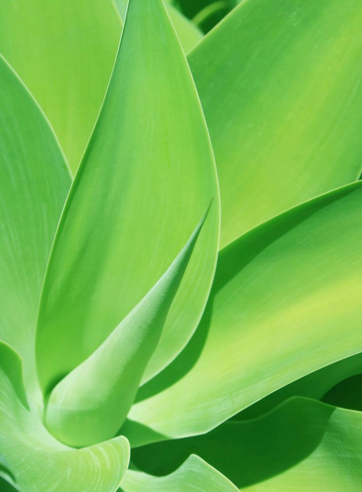 Aloe Vera - We use organic Aloe Vera plant for many different reasons. Not only is it a great moisturizer, but it is also very soothing to the skin (think of products with aloe to soothe sunburns). Aloe Vera is great in sunscreen for the same reasons why it is great to treat sunburns!