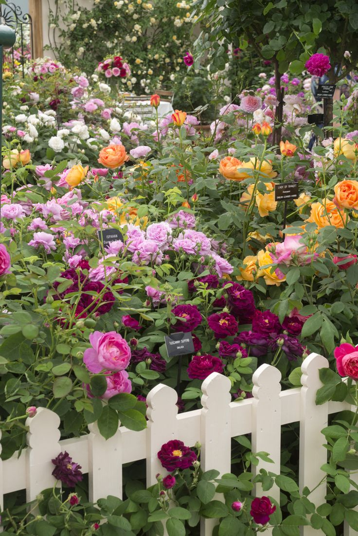 Kết quả hình ảnh cho a beautiful  rose garden