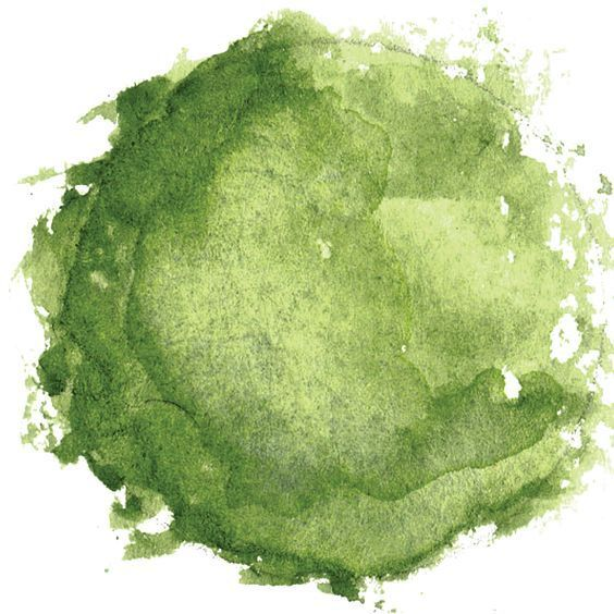 Resultado de imagem para tree png plan watercolor