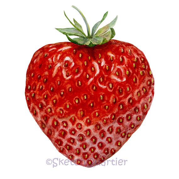 Strawberry Watercolor / Digital clipart for instant download