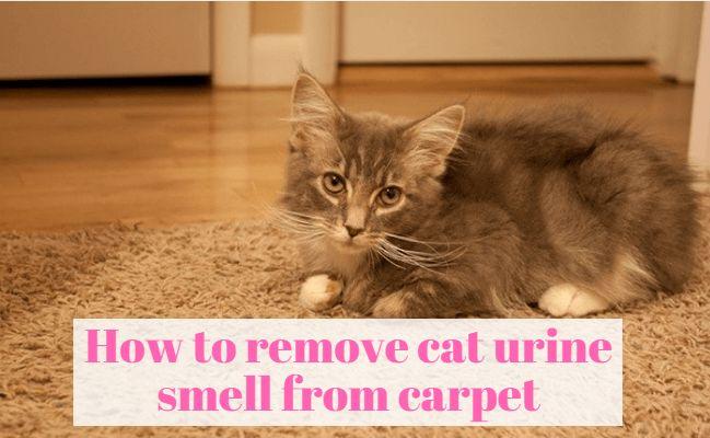 Best 25 Cat Urine Remover Ideas On Pinterest Pet Urine