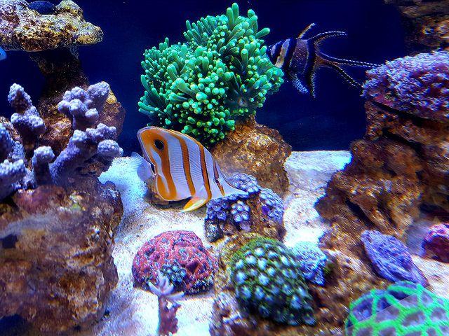 Home Tropical Fish Youaqua Saltwateraquarium Fishkeeping Aquarium Beautiful Tropical Fish Tropical Saltwater Aquarium