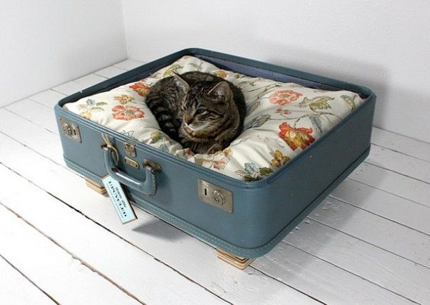 A nice spot for the cat!!  The standard furniture for cats are often a bit boring and not very fashionable. This old suitcase is just superb ànd deco-friendly.  Définitely if you like a vintage touch in your house! °I love it!!