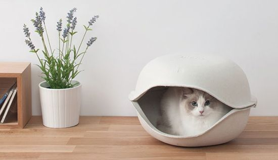 CatShell From Oppo - cute for tiny dogs!