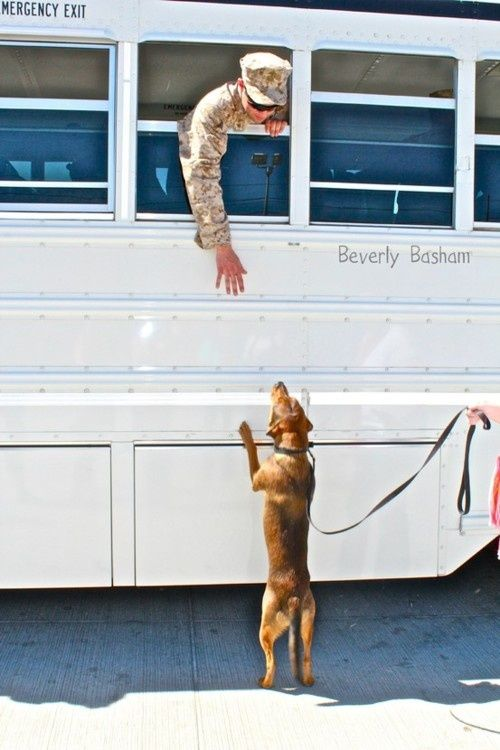 Image detail for -Soldier Saying Goodbye To His Dog | CuteStuff.co - Cute Animals, Cute ...