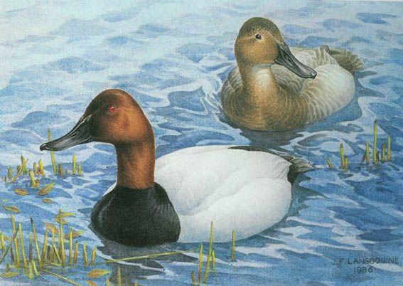 Canvasbacks in Spring by J. Fenwick Lansdowne (1937-2008)