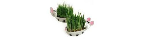 Antiparasitarios y malta para tu gato al mejor precio en la tienda de mascotas online Wakuplanet.com