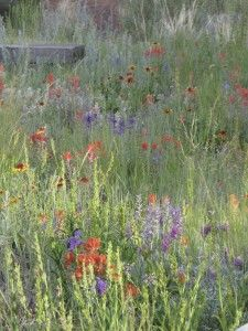 "A wildscape ""lawn"" with native grasses and wildflowers."