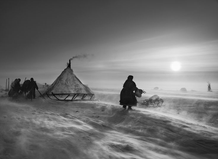 North of the Ob River, about 100 kilometers inside the Yamal peninsula, fierce winds keep even daytime temperatures low. Inside the Arctic Circle. Yamal peninsula, Siberia. Russia. By Sebastiao Salgado