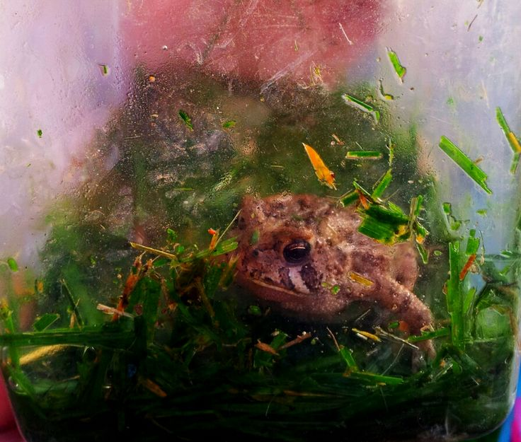how to make a frog habitat