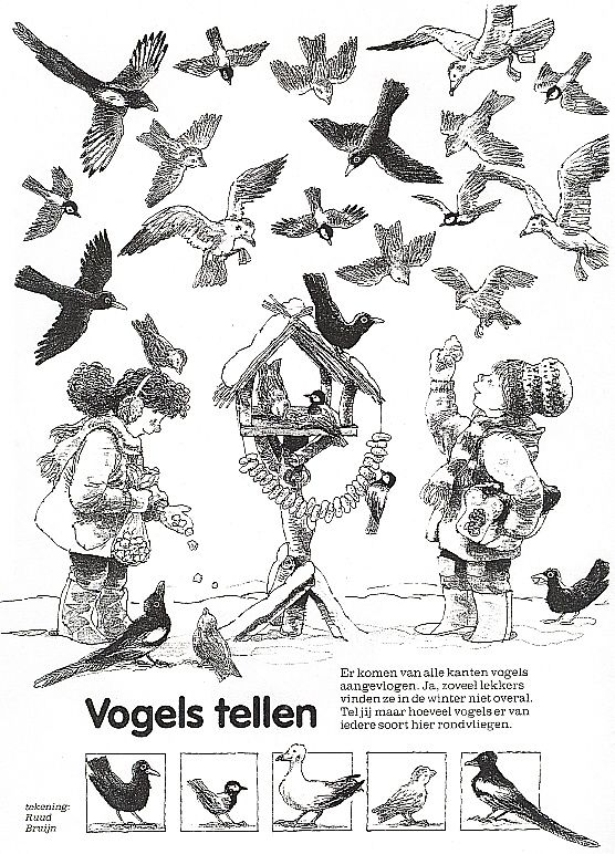thema vogels in de winter - Google zoeken